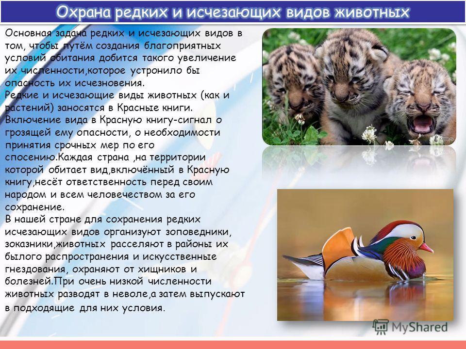 Основная задача редких и исчезающих видов в том, чтобы путём создания благоприятных условий обитания добится такого увеличение их численности,которое устронило бы опасность их исчезновения. Редкие и исчезающие виды животных (как и растений) заносятся