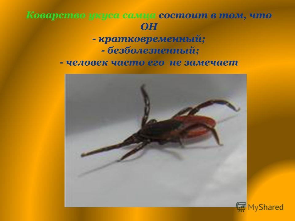 Коварство укуса самца состоит в том, что ОН - кратковременный; - безболезненный; - человек часто его не замечает