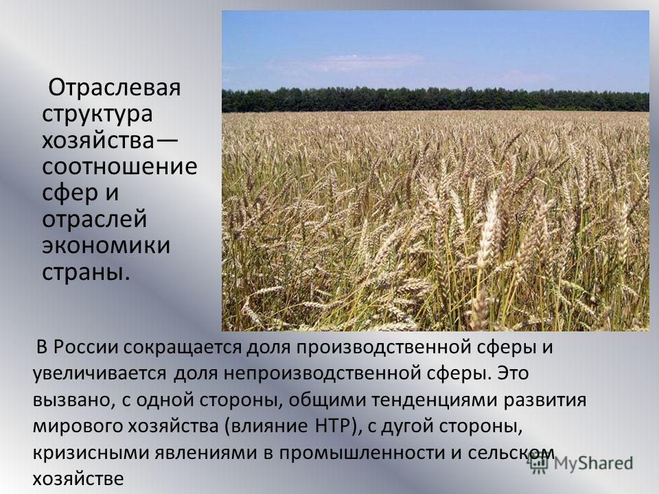 Отраслевая структура хозяйства соотношение сфер и отраслей экономики страны. В России сокращается доля производственной сферы и увеличивается доля непроизводственной сферы. Это вызвано, с одной стороны, общими тенденциями развития мирового хозяйства