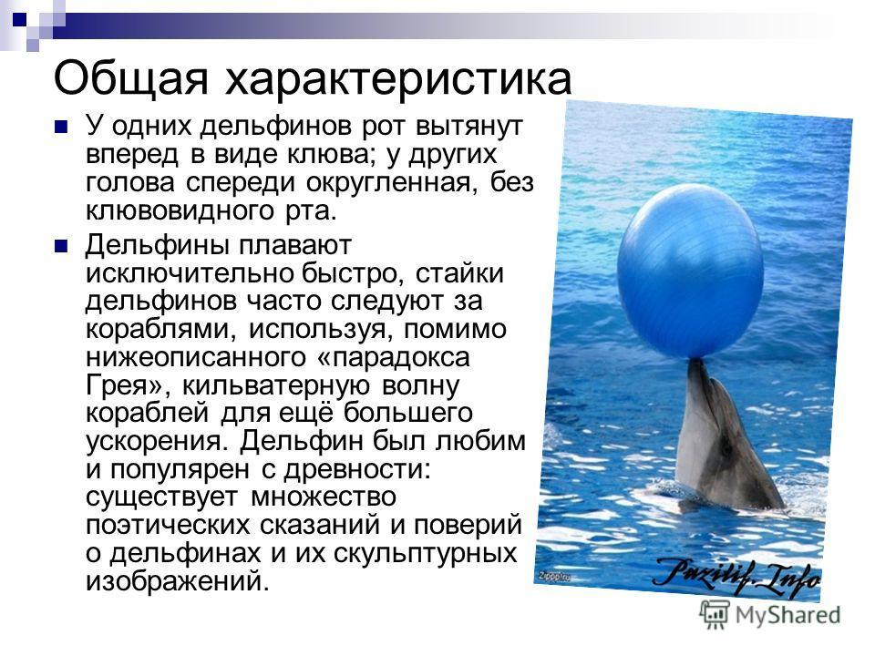 Общая характеристика У одних дельфинов рот вытянут вперед в виде клюва; y других голова спереди округленная, без клювовидного рта. Дельфины плавают исключительно быстро, стайки дельфинов часто следуют за кораблями, используя, помимо нижеописанного «п