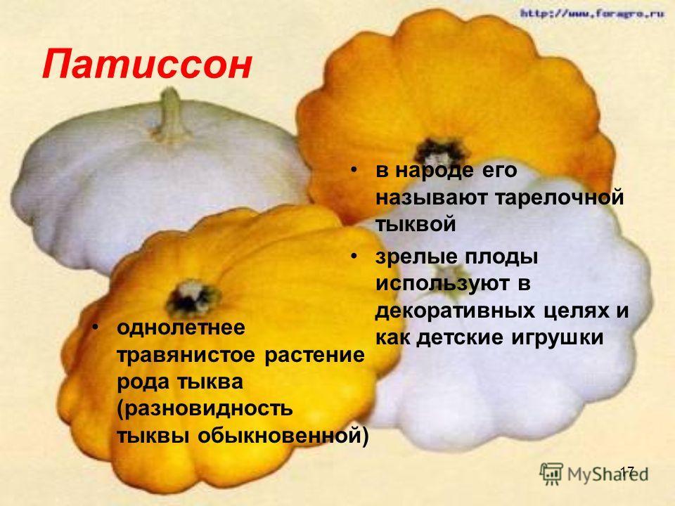 17 Патиссон однолетнее травянистое растение рода тыква (разновидность тыквы обыкновенной) в народе его называют тарелочной тыквой зрелые плоды используют в декоративных целях и как детские игрушки