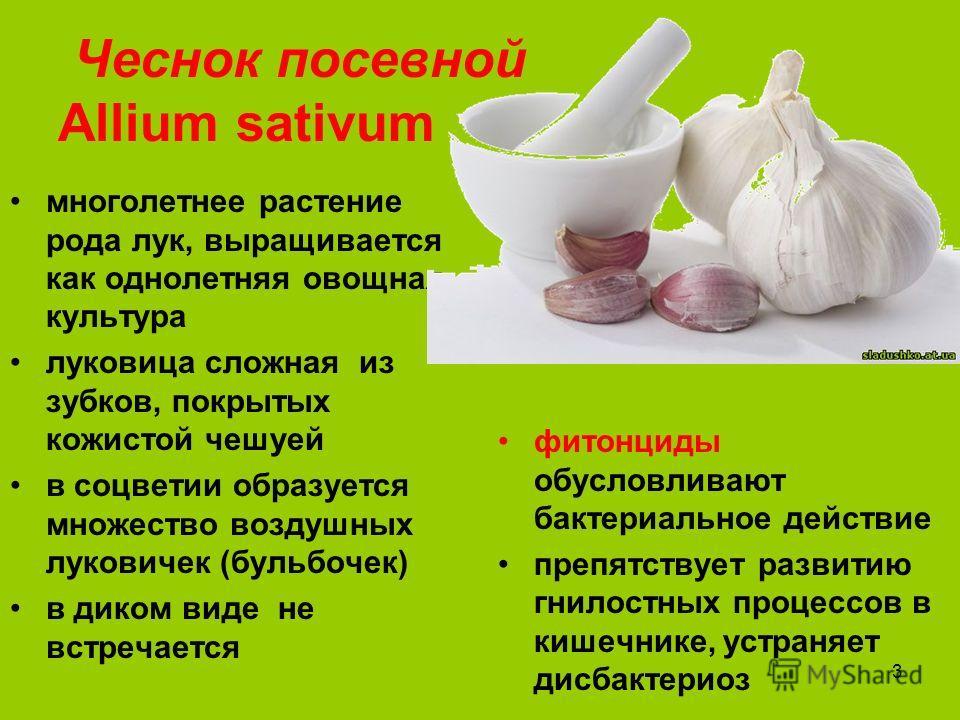 3 Чеснок посевной Аllium sativum многолетнее растение рода лук, выращивается как однолетняя овощная культура луковица сложная из зубков, покрытых кожистой чешуей в соцветии образуется множество воздушных луковичек (бульбочек) в диком виде не встречае