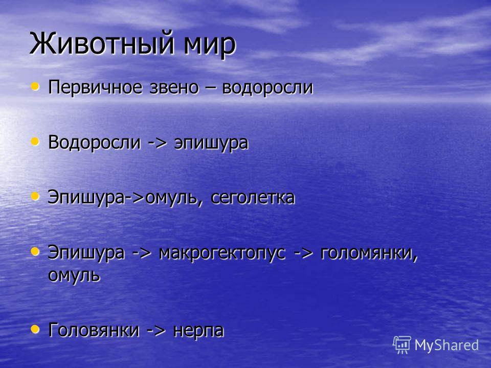Животный мир Первичное звено – водоросли Первичное звено – водоросли Водоросли -> эпишура Водоросли -> эпишура Эпишура->омуль, сеголетка Эпишура->омуль, сеголетка Эпишура -> макрогектопус -> голомянки, омуль Эпишура -> макрогектопус -> голомянки, ому
