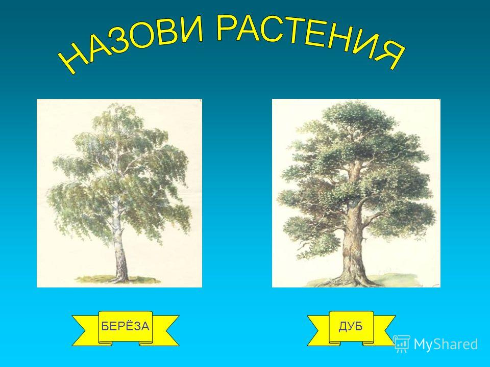 БЕРЁЗАДУБ