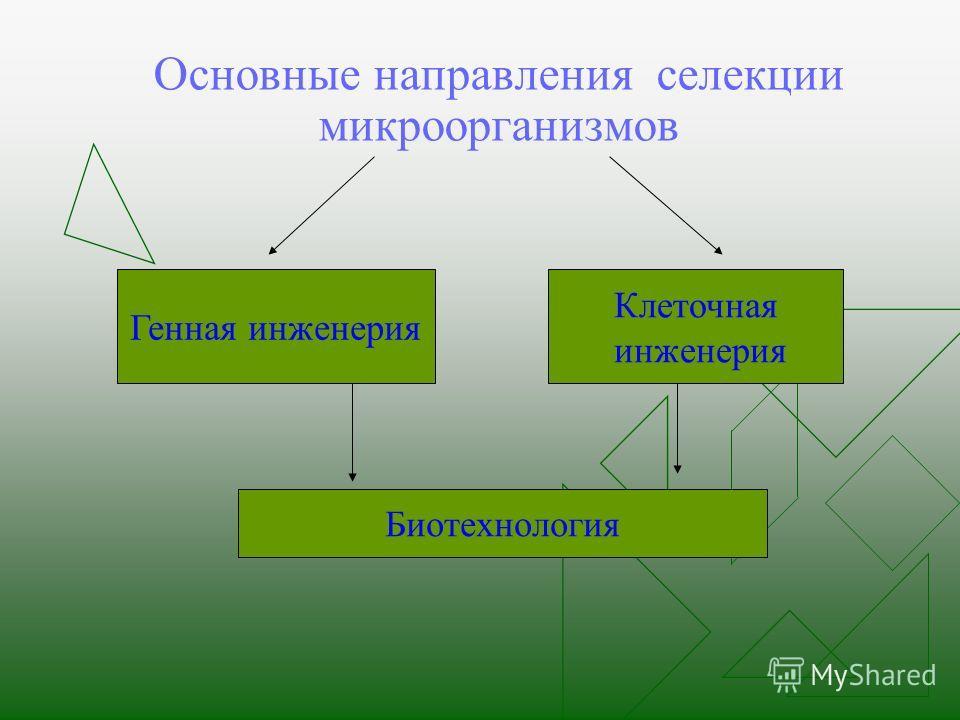 Основные направления селекции микроорганизмов Генная инженерия Клеточная инженерия Биотехнология
