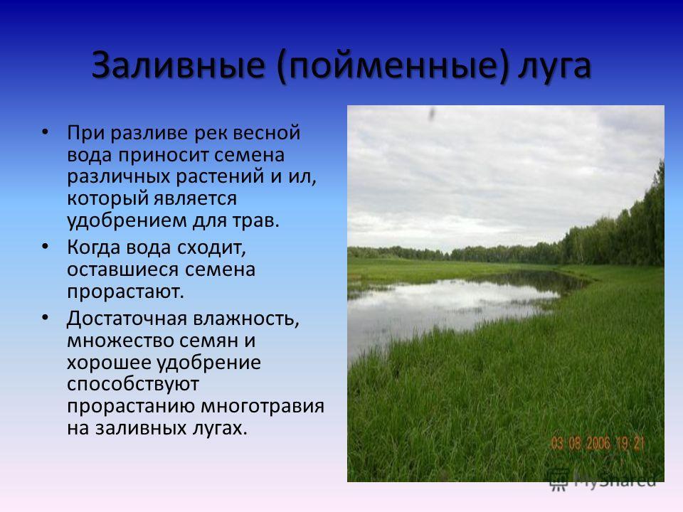Луг Безлесное пространство, покрытое многолетними травами заливной Орошаемый водами рек во время разлива суходольный Орошаемый только дождевой водой