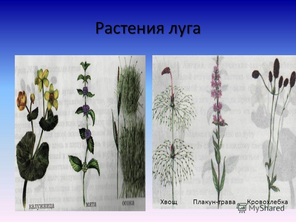 Суходольные леса Требуют особой заботы человека. Дают время для того, чтобы травы вызрели и дали семена. Рыхлят почву, подкармливают растения. Используют для пастьбы животных и заготовки сена.
