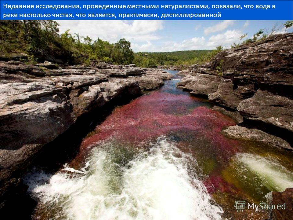 Недавние исследования, проведенные местными натуралистами, показали, что вода в реке настолько чистая, что является, практически, дистиллированной