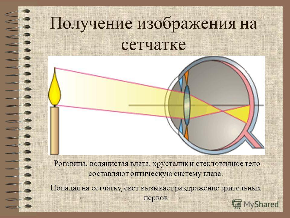 Получение изображения на сетчатке Роговица, водянистая влага, хрусталик и стекловидное тело составляют оптическую систему глаза. Попадая на сетчатку, свет вызывает раздражение зрительных нервов