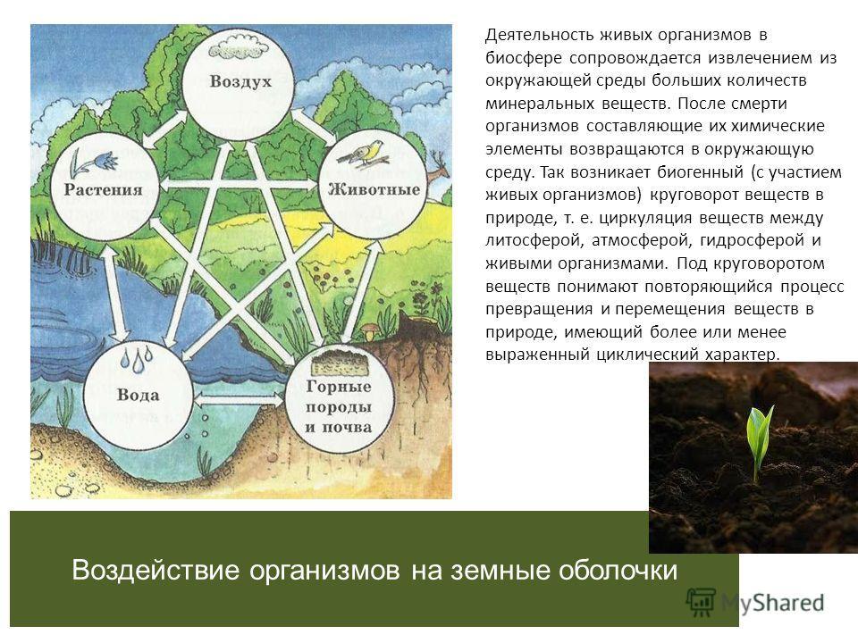 МБОУ СОШ 38 Презентация: «Влияние живых организмов на гидросферу и литосферу» Выполнила: 2013 год