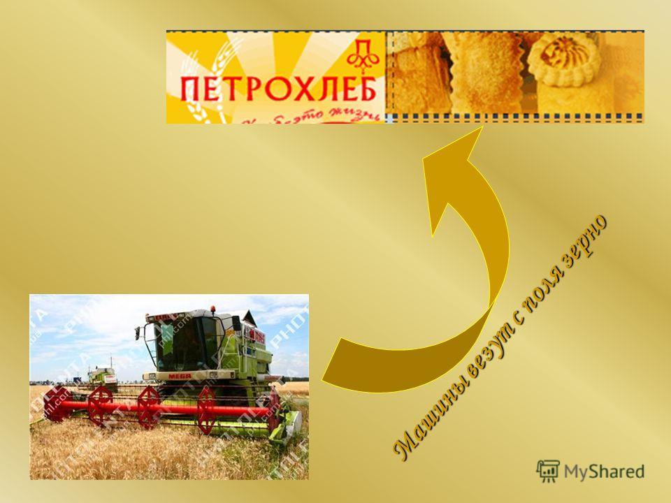 Машины везут с поля зерно