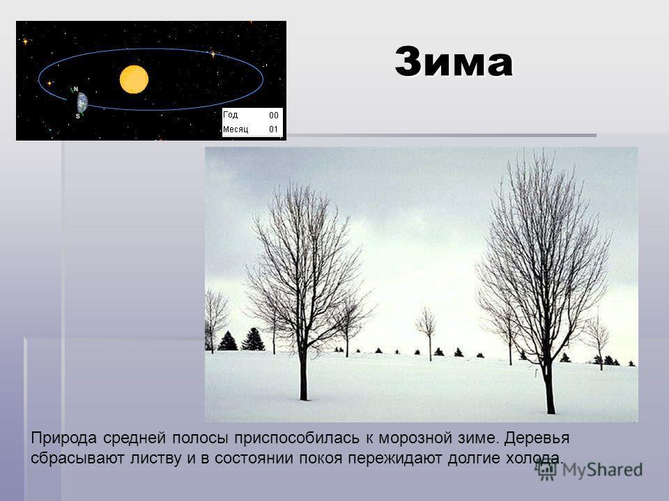 Зима Природа средней полосы приспособилась к морозной зиме. Деревья сбрасывают листву и в состоянии покоя пережидают долгие холода.