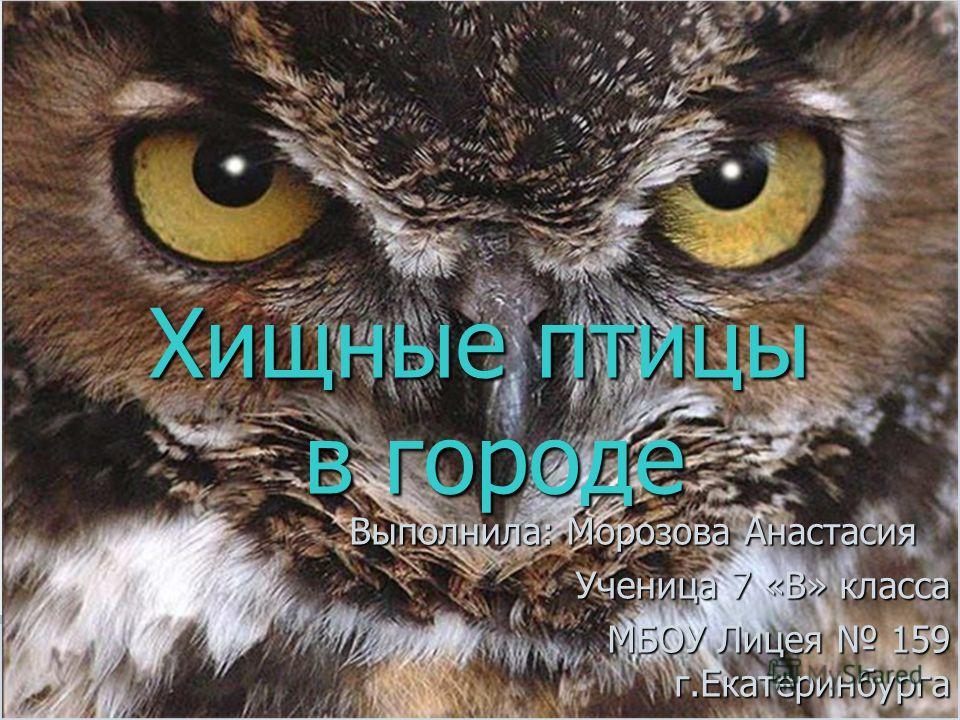 Хищные птицы в городе Выполнила: Морозова Анастасия Ученица 7 «В» класса МБОУ Лицея 159 г.Екатеринбурга