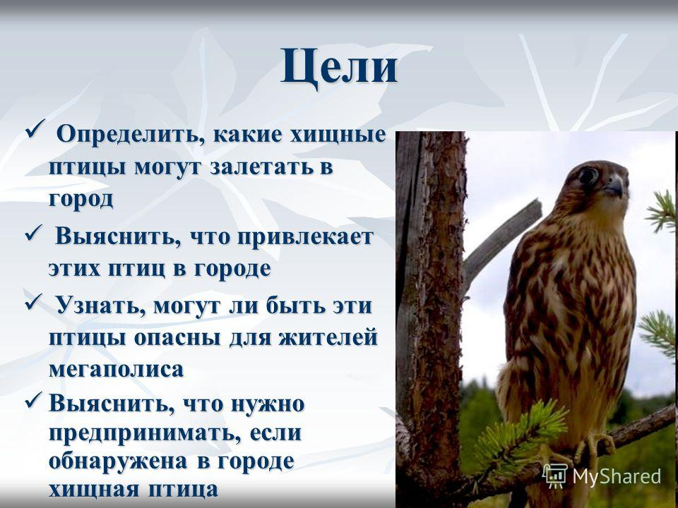 Цели Определить, какие хищные птицы могут залетать в город Определить, какие хищные птицы могут залетать в город Выяснить, что привлекает этих птиц в городе Выяснить, что привлекает этих птиц в городе Узнать, могут ли быть эти птицы опасны для жителе