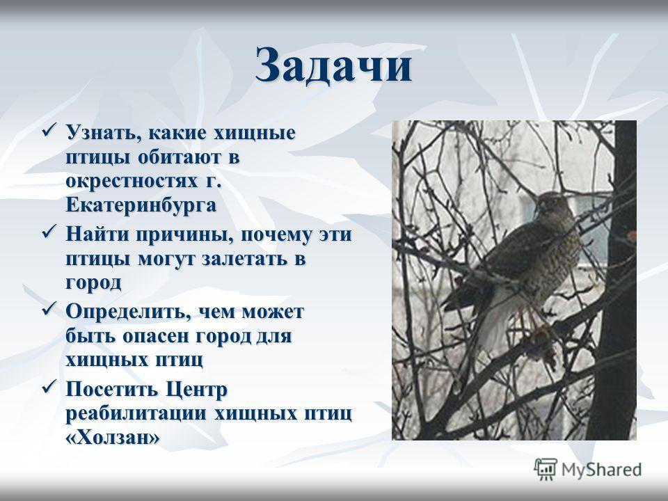 Задачи Узнать, какие хищные птицы обитают в окрестностях г. Екатеринбурга Узнать, какие хищные птицы обитают в окрестностях г. Екатеринбурга Найти причины, почему эти птицы могут залетать в город Найти причины, почему эти птицы могут залетать в город