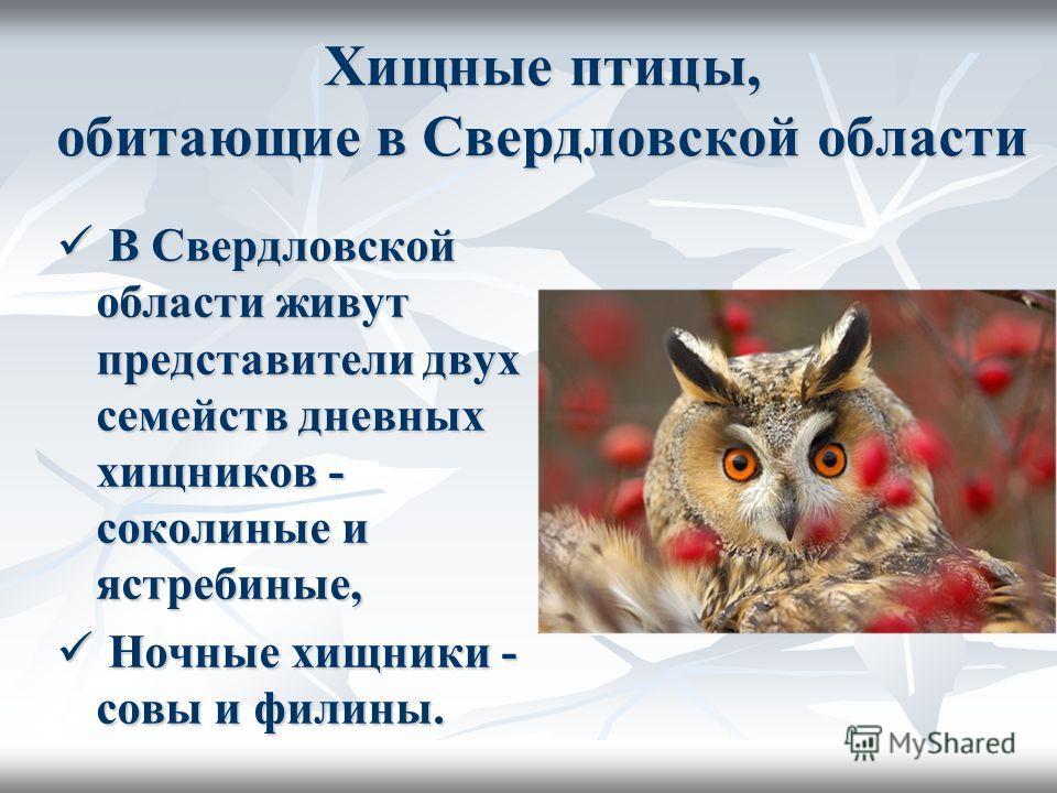 Хищные птицы, обитающие в Свердловской области В Свердловской области живут представители двух семейств дневных хищников - соколиные и ястребиные, В Свердловской области живут представители двух семейств дневных хищников - соколиные и ястребиные, Ноч