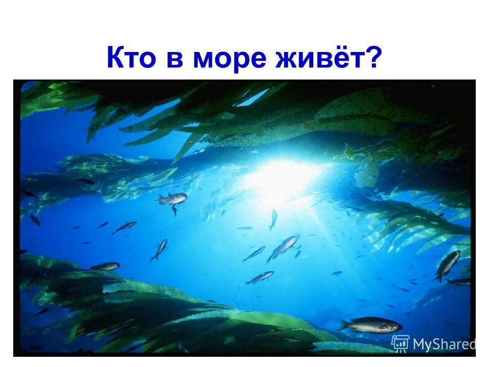 Кто в море живёт?