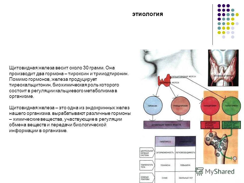 Щитовидная железа весит около 30 грамм. Она производит два гормона – тироксин и трииодтиронин. Помимо гормонов, железа продуцирует тиреокальцитонин, биохимическая роль которого состоит в регуляции кальциевого метаболизма в организме. Щитовидная желез