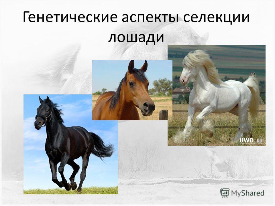 Генетические аспекты селекции лошади