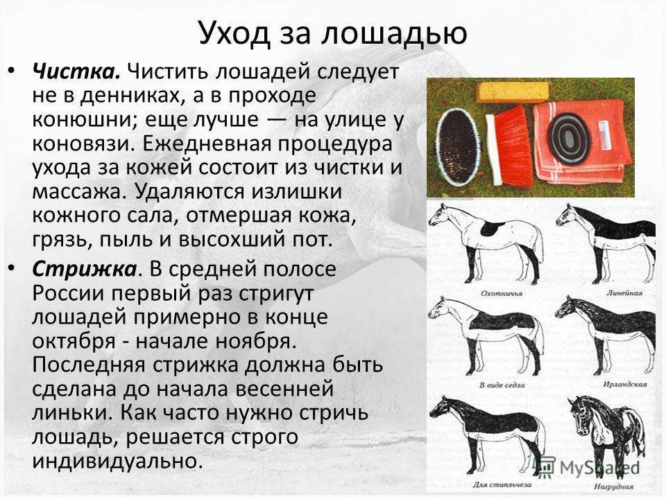 Уход за лошадью Чистка. Чистить лошадей следует не в денниках, а в проходе конюшни; еще лучше на улице у коновязи. Ежедневная процедура ухода за кожей состоит из чистки и массажа. Удаляются излишки кожного сала, отмершая кожа, грязь, пыль и высохший