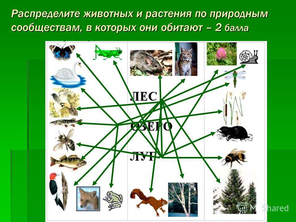 Распределите животных и растения по природным сообществам, в которых они обитают – 2 балла