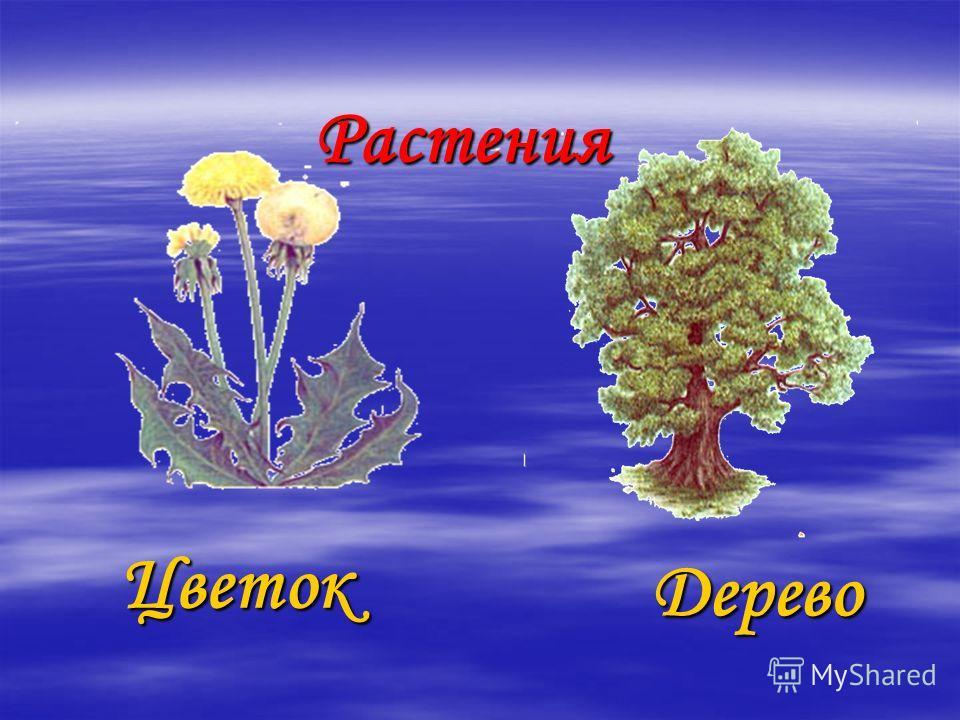 Растения Цветок Дерево