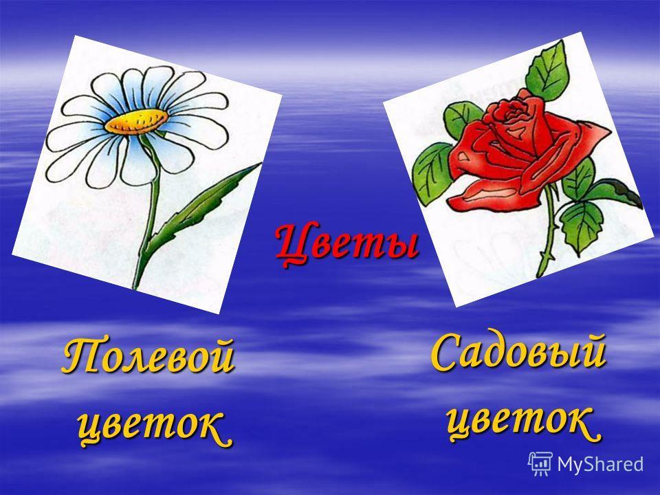 Цветы Полевой цветок Садовыйцветок