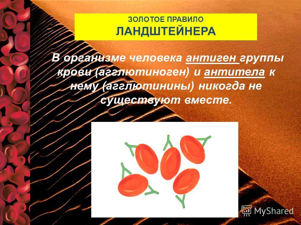 В организме человека антиген группы крови (агглютиноген) и антитела к нему (агглютинины) никогда не существуют вместе. ЗОЛОТОЕ ПРАВИЛО ЛАНДШТЕЙНЕРА