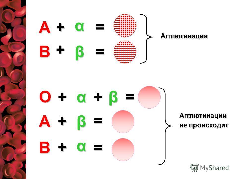 А В α β + = + =Оβ+α+ А α + = В β + = = Агглютинация Агглютинации не происходит