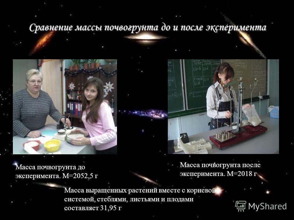 Сравнение массы почвогрунта до и после эксперимента Масса почвогрунта до эксперимента. М=2052,5 г Масса почвогрунта после эксперимента. М=2018 г Масса выращенных растений вместе с корневой системой, стеблями, листьями и плодами составляет 31,95 г