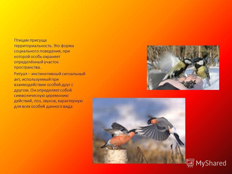 Птицам присуща территориальность. Это форма социального поведения, при которой особь охраняет определённый участок пространства. Ритуал – инстинктивный сигнальный акт, используемый при взаимодействии особей друг с другом. Он определяет собой символич