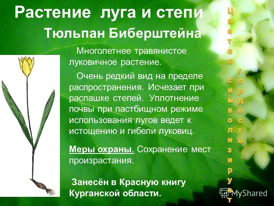 Тюльпан Биберштейна Растение луга и степи Многолетнее травянистое луковичное растение. Очень редкий вид на пределе распространения. Исчезает при распашке степей. Уплотнение почвы при пастбищном режиме использования лугов ведет к истощению и гибели лу