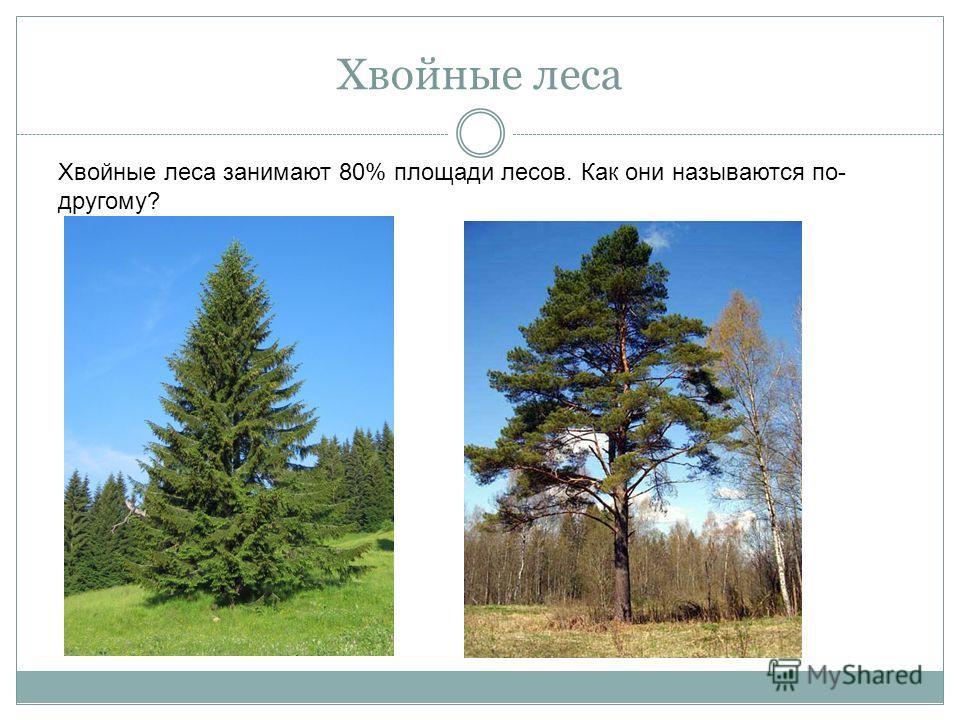 Хвойные леса Хвойные леса занимают 80% площади лесов. Как они называются по- другому?