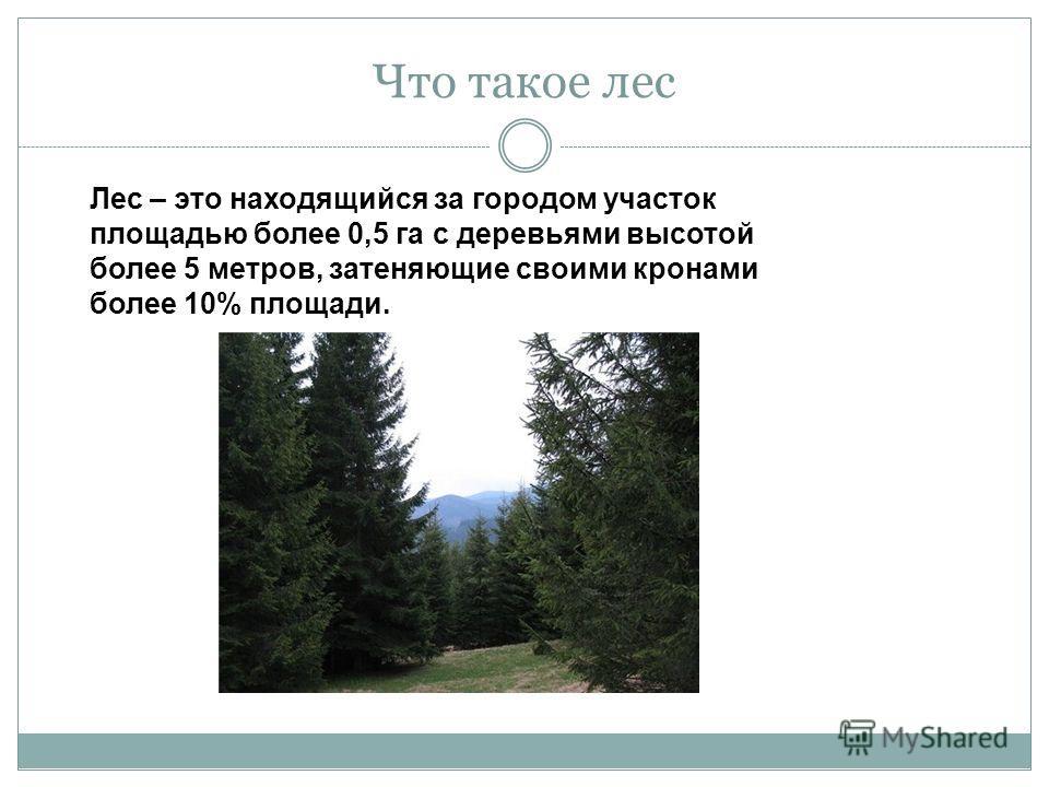 Что такое лес Лес – это находящийся за городом участок площадью более 0,5 га с деревьями высотой более 5 метров, затеняющие своими кронами более 10% площади.