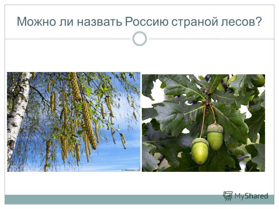 Можно ли назвать Россию страной лесов?