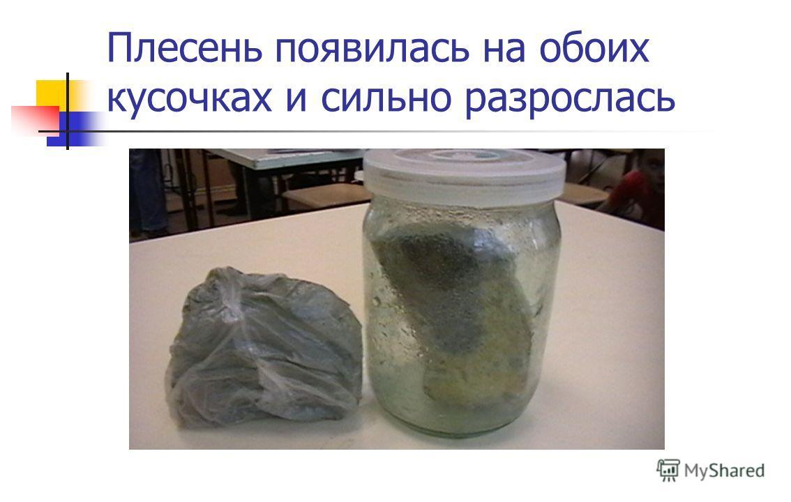 Как вырастить плесень на хлебе в домашних условиях за 1 день