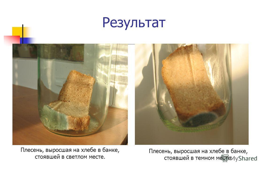 Результат Плесень, выросшая на хлебе в банке, стоявшей в темном месте. Плесень, выросшая на хлебе в банке, стоявшей в светлом месте.