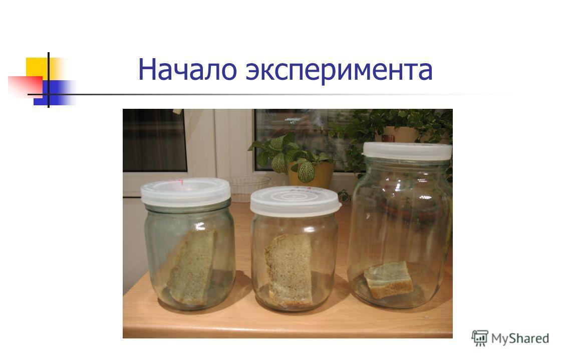 Начало эксперимента