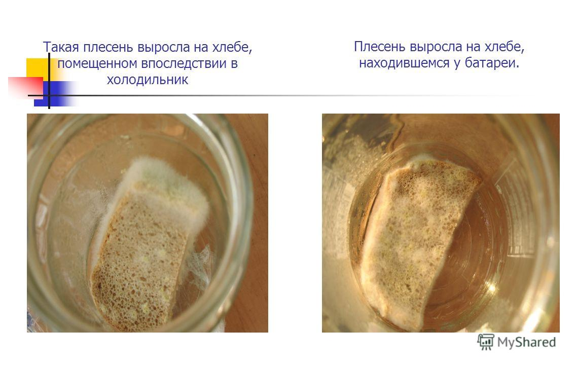 Такая плесень выросла на хлебе, помещенном впоследствии в холодильник Плесень выросла на хлебе, находившемся у батареи.