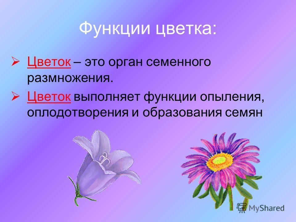Функции цветка: Цветок – это орган семенного размножения. Цветок выполняет функции опыления, оплодотворения и образования семян