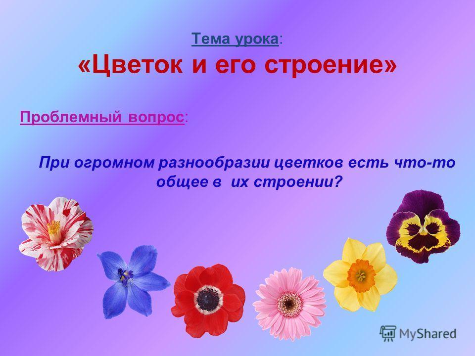 Тема урока: «Цветок и его строение» Проблемный вопрос: При огромном разнообразии цветков есть что-то общее в их строении?