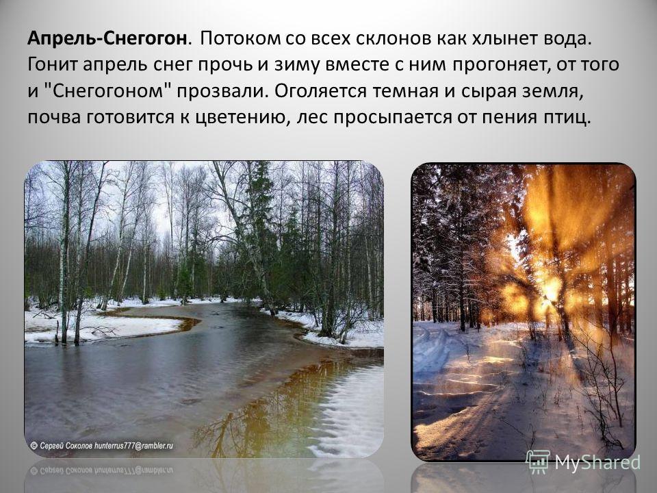Апрель-Снегогон. Потоком со всех склонов как хлынет вода. Гонит апрель снег прочь и зиму вместе с ним прогоняет, от того и Снегогоном прозвали. Оголяется темная и сырая земля, почва готовится к цветению, лес просыпается от пения птиц.