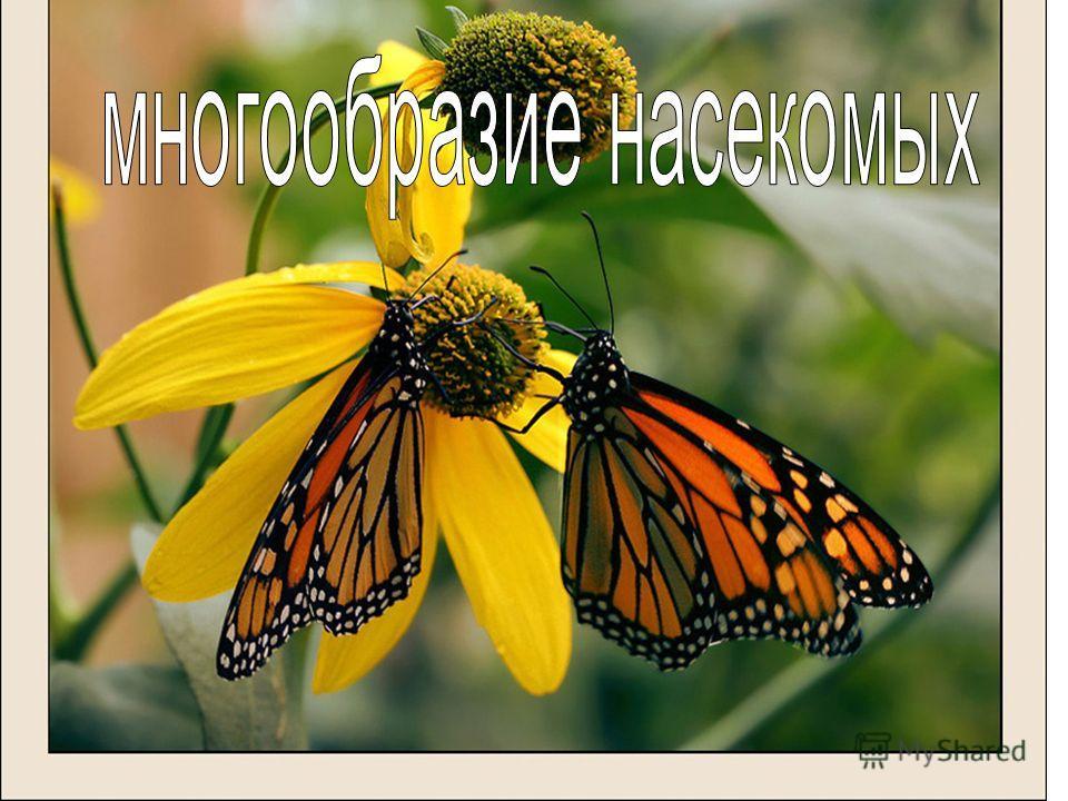 Многообразие насекомых Отряды:ЧешуекрылыеДвукрылыеРавнокрылыеБлохи