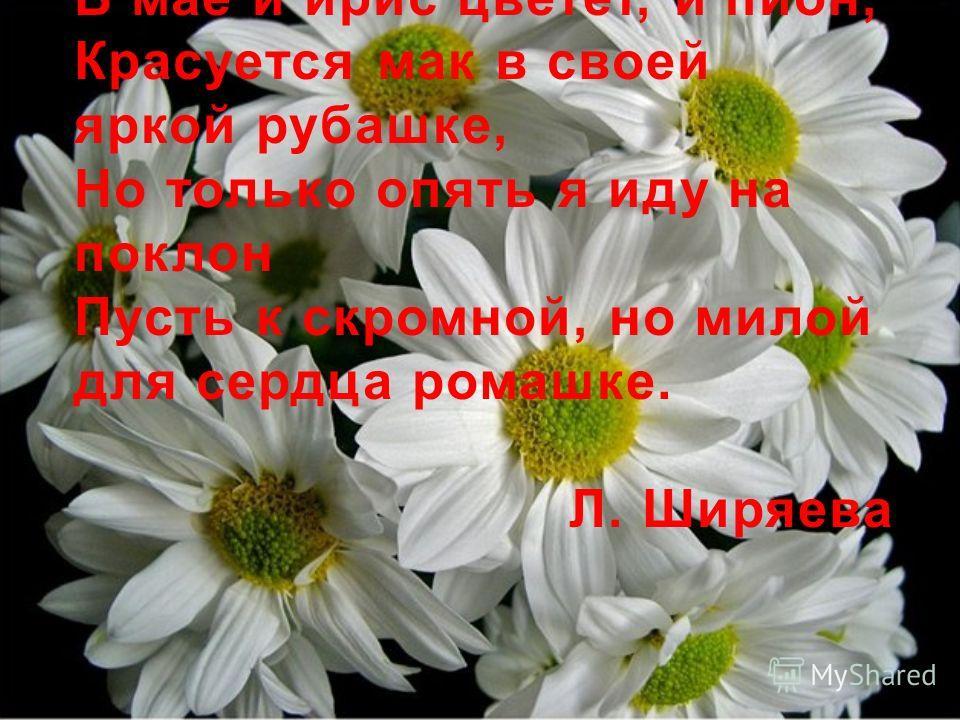 В мае и ирис цветет, и пион, Красуется мак в своей яркой рубашке, Но только опять я иду на поклон Пусть к скромной, но милой для сердца ромашке. Л. Ширяева
