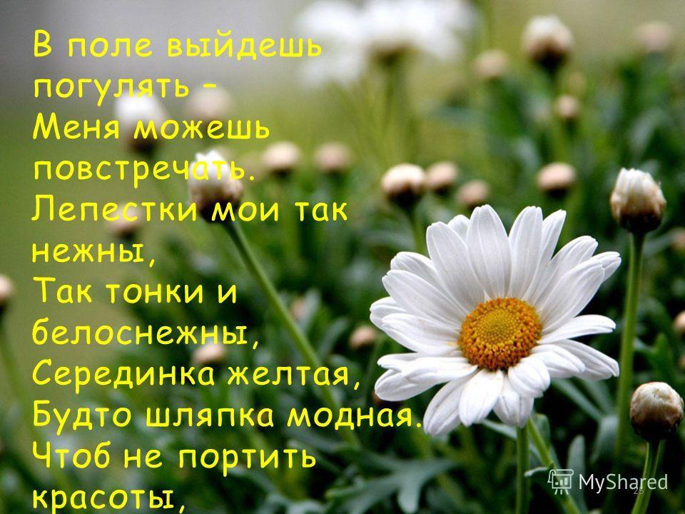 В поле выйдешь погулять – Меня можешь повстречать. Лепестки мои так нежны, Так тонки и белоснежны, Серединка желтая, Будто шляпка модная. Чтоб не портить красоты, Нужно всем беречь цветы! Т. Рут 25