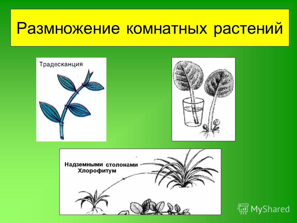 как посадить комнатные цветы из семян