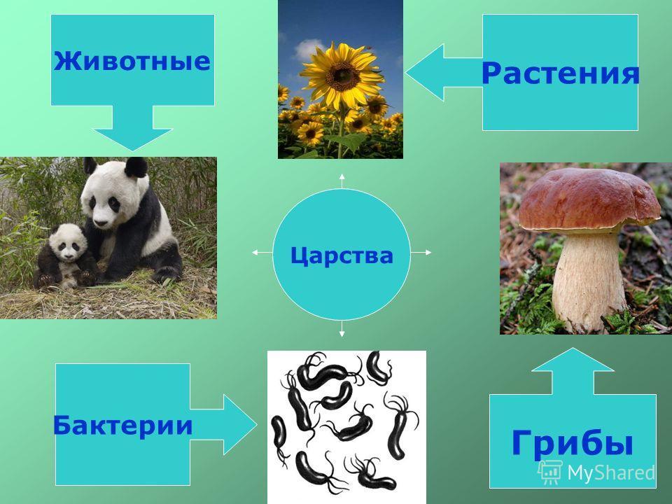 Царства растения грибы бактерии