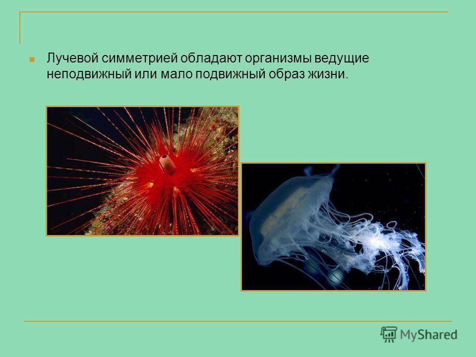 Лучевой симметрией обладают организмы ведущие неподвижный или мало подвижный образ жизни.