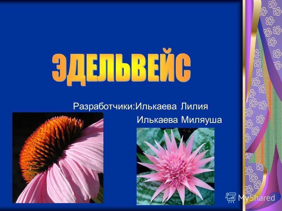 Разработчики:Илькаева Лилия Илькаева Миляуша
