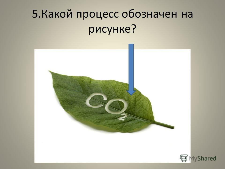 5.Какой процесс обозначен на рисунке?